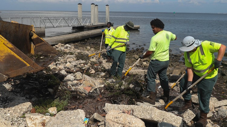 Red tide in Bay area: 1,624 tons of marine life removed from Pinellas County