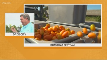 Dade City gears up for the annual Kumquat Festival