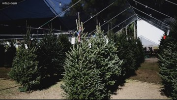 Christmas tree seller a local family favorite for generations