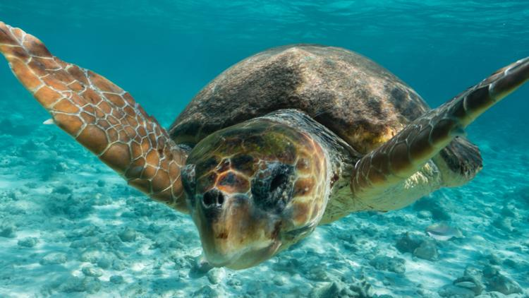 5 facts to know for World Sea Turtle Day