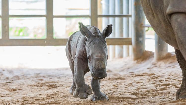 white rhino zootampa2