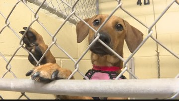 Humane Society of Tampa Bay hosts a Black Friday adoption special