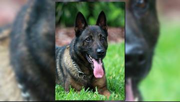 Retired Tampa police K-9 dies