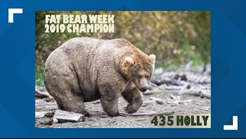 Big bad Holly is your 2019 Fat Bear Week champion