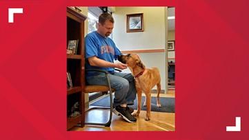 Frugal Florida man risks big money to adopt abused Nebraska dog