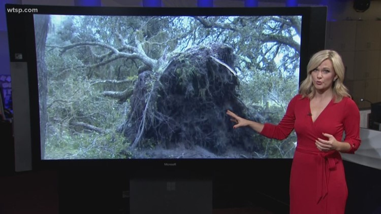 Myakka City family hides from tornado
