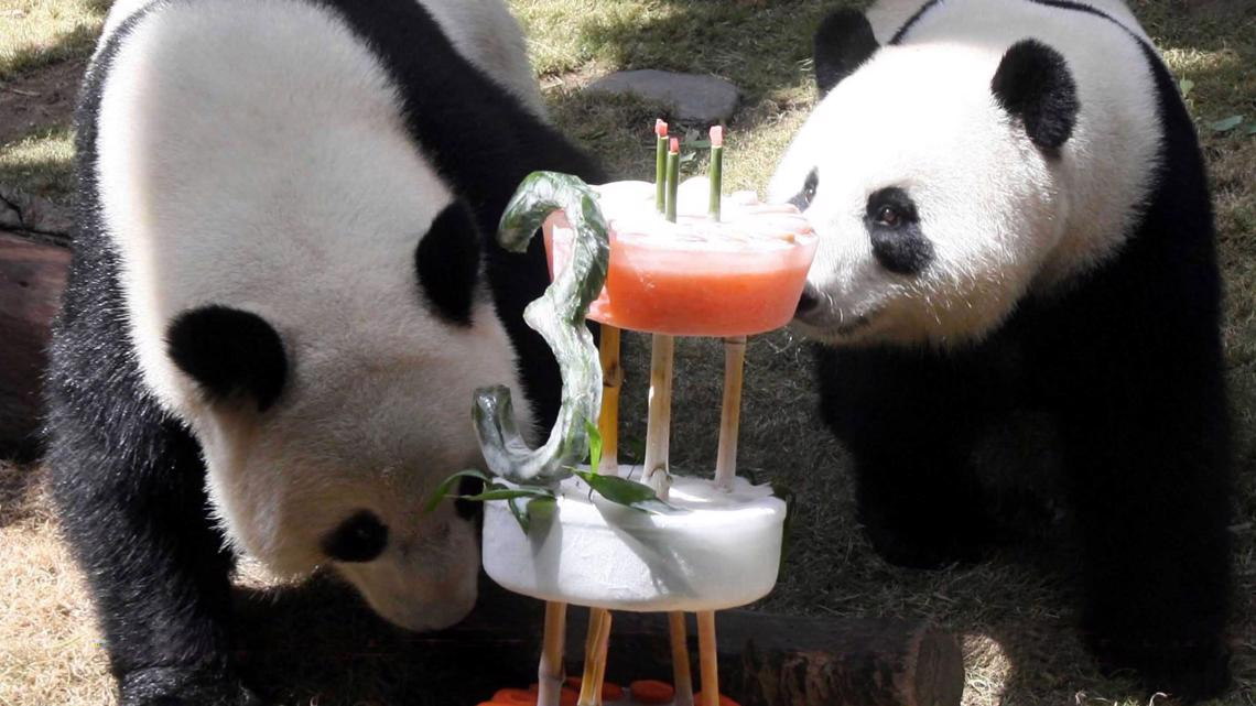 Pandas finally mate after 10 years when zoo shuts down during pandemic
