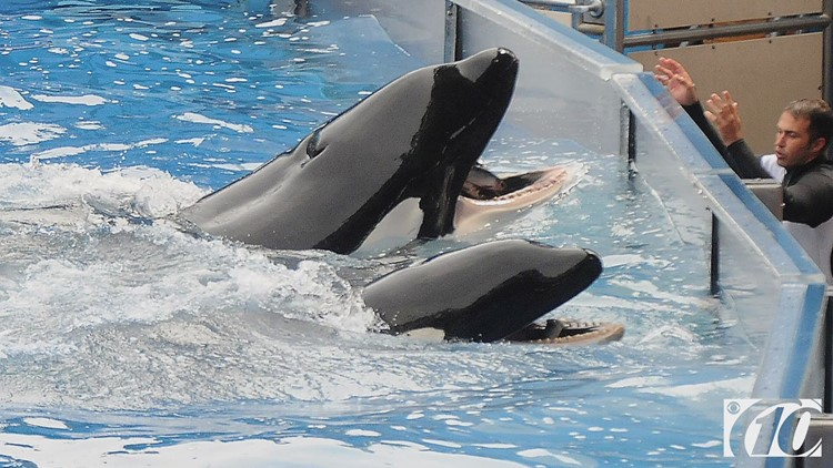 SeaWorld cuts 350 jobs, mostly in Orlando and California