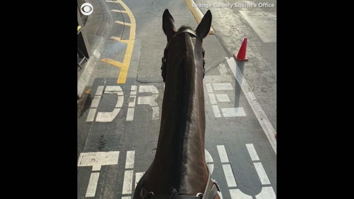 Sheriff's deputies take horses through Chick-fil-A drive-thru