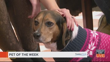 Meet Vicky, our Pet of the Week