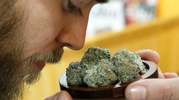 Hillsborough County decriminalizes small amounts of marijuana