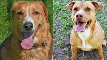 Adoption fees waived for up to 700 dogs and cats that need homes in Hernando County