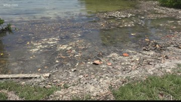 Worker says he's never encountered anything like blue-green algae