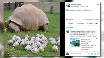 VERIFY: Yes, tortoise photo is real, but it's not new