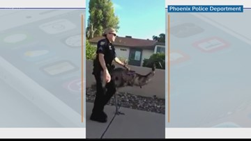 Wow Moments: Police round up escaped emu