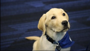Lightning introduce 'Bolt' the yellow lab as new team ambassador