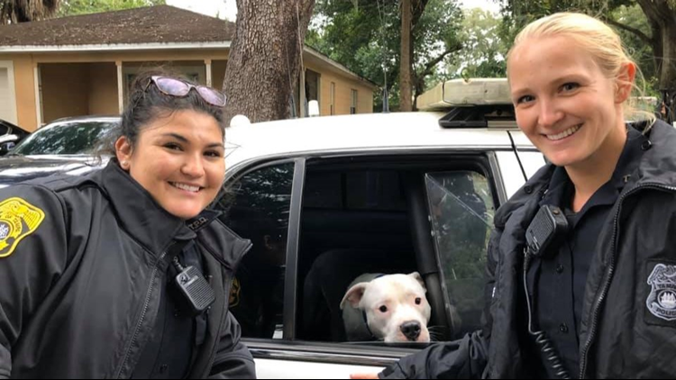 Dog using porch to stay warm picked up by police