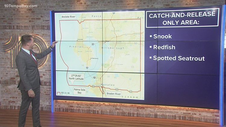FWC issues new catch-and-release measures for Tampa Bay due to red tide