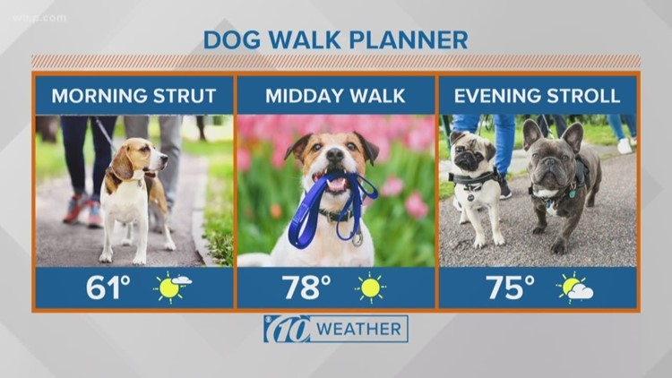 Dog walking planner for Friday
