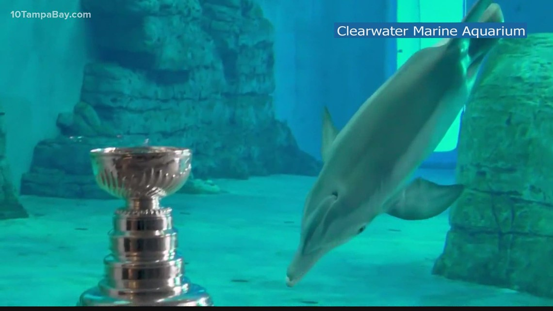 Lightning show off Stanley Cup to dolphins at Clearwater Marine Aquarium