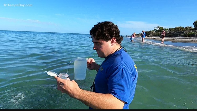 'It can be very patchy': Scientists work to map healthy beaches to help beachgoers avoid red tide