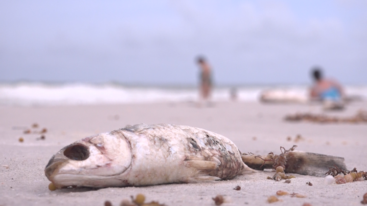 Red tide at the beach: See the latest conditions
