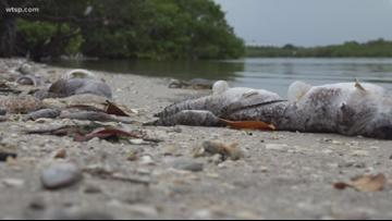 Red tide is giving most of Florida a break, for now