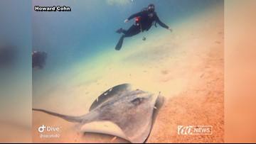 Giant stingray surprises divers off the coast of Florida | 10News WTSP