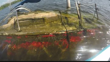 Derelict vessels removed around the Tampa Bay area
