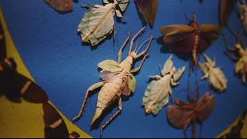 Artist uses thousands of exotic bugs to create masterpieces at Museum of Fine Arts