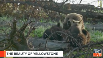 Yellowstone Live back for second season