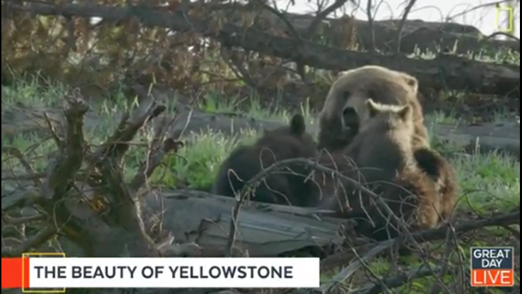 """""""Yellowstone Live"""" back for second season"""