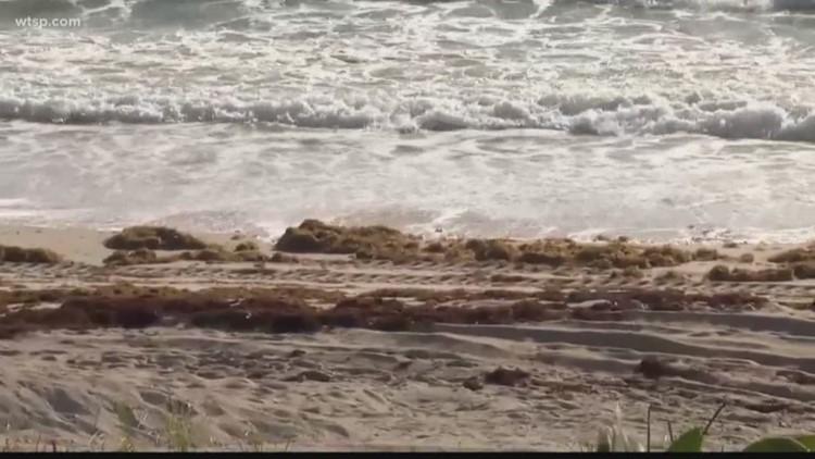 Floridas Atlantic Coast Sees Red Tide Bloom Wtsp