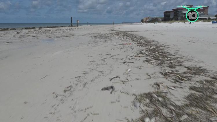 Parts of Tampa Bay area coastline under beach hazard statement due to red tide