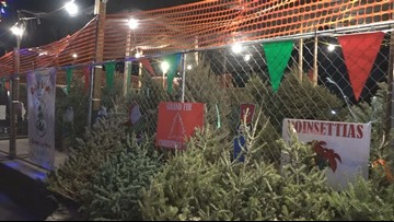 Another Christmas tree problem: Fewer farmers