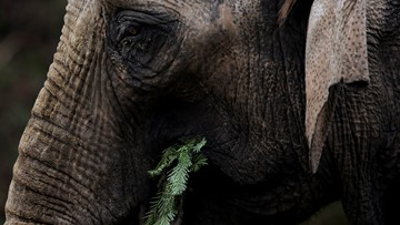 Man crushed to death by elephant after whipping it to sit