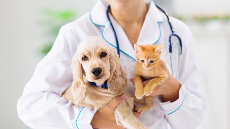 New pet wellness center opens in Pinellas Park