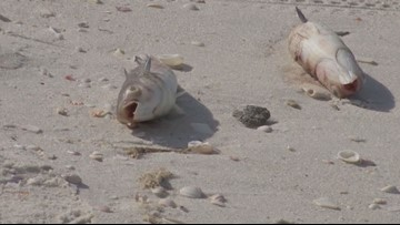 Red tide causes problems for parts of Florida