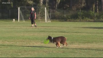 UpDog Triple Crown Challenge: Man and dog team up to compete