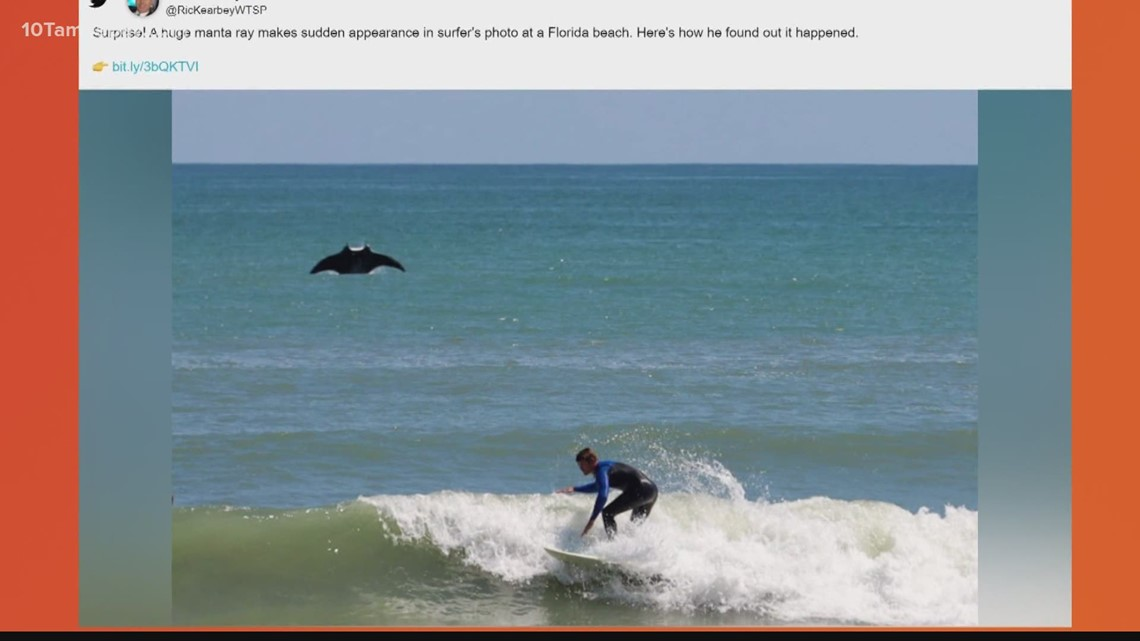 Manta ray photobombs a surfer