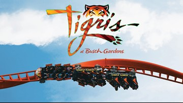 Great Day Live takes on Tigris!