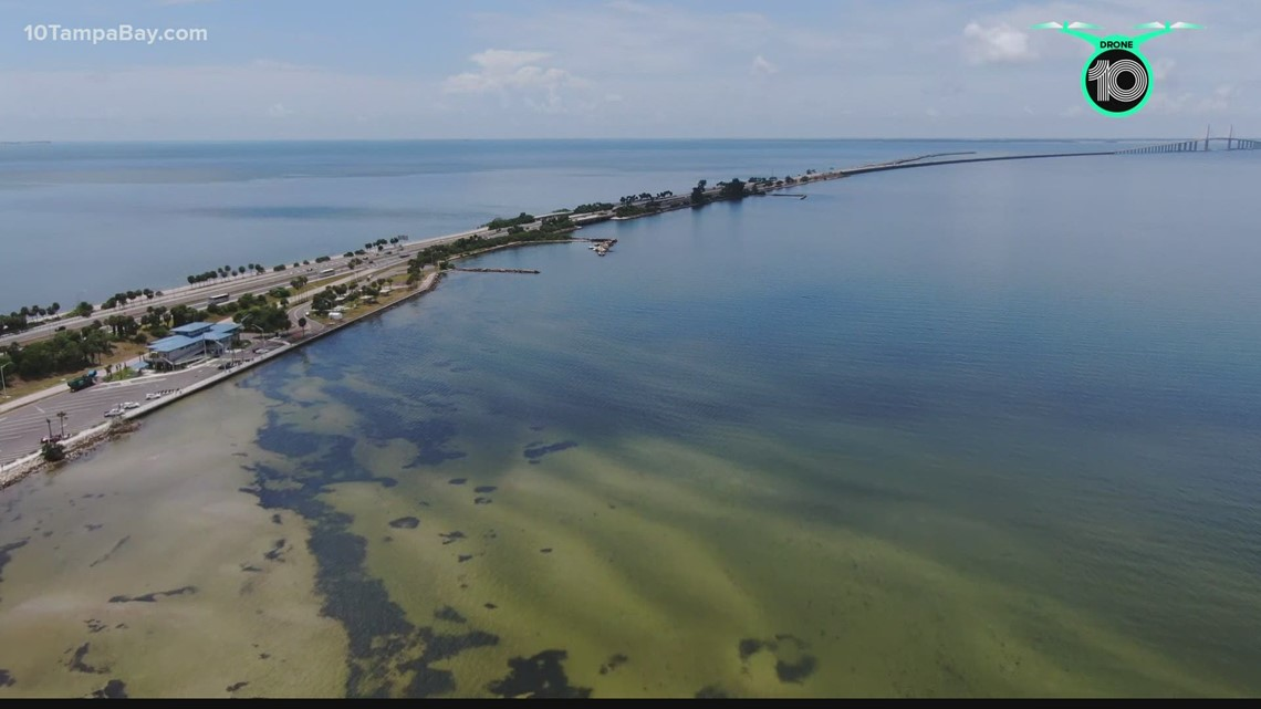 UF researcher studies ways to reduce red tide