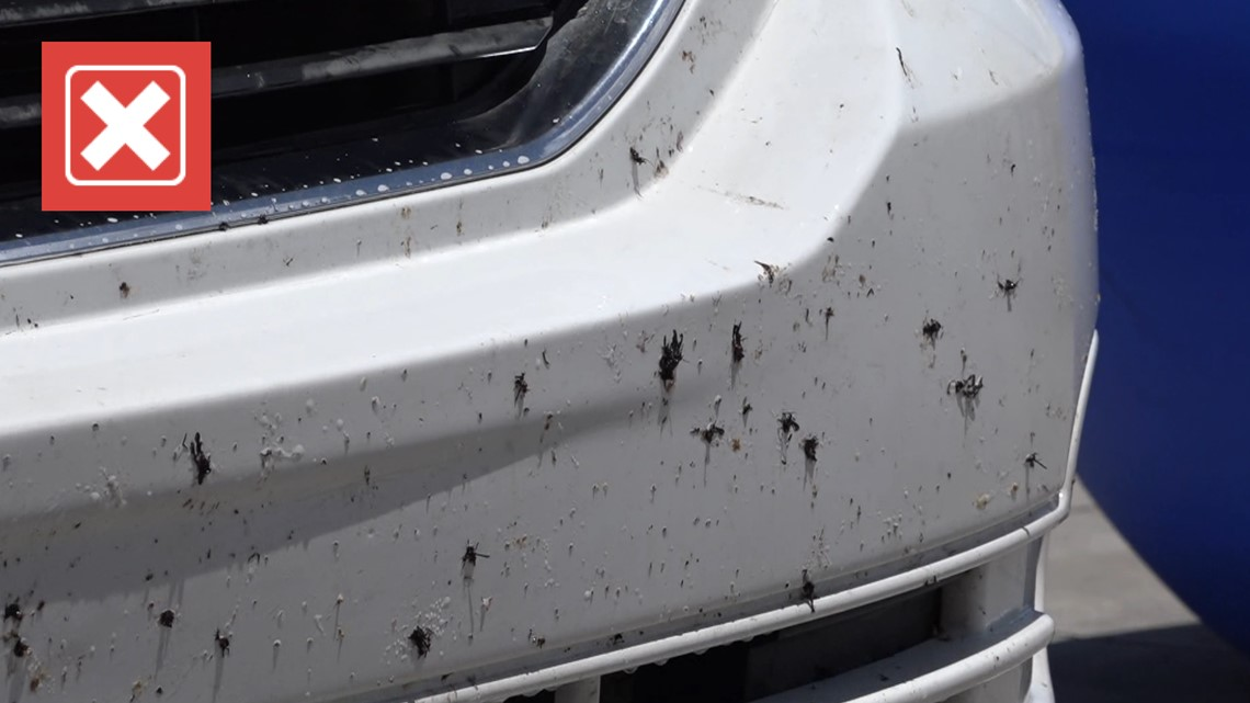 No, COVID didn't 'kill off' lovebugs but here's some reasons why you've noticed fewer lately