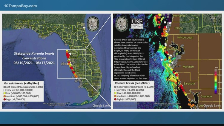 Red tide: medium, high concentrations off coast of Hernando, Pinellas and Pasco Counties