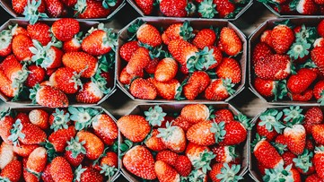 Your guide to the 2020 Florida Strawberry Festival