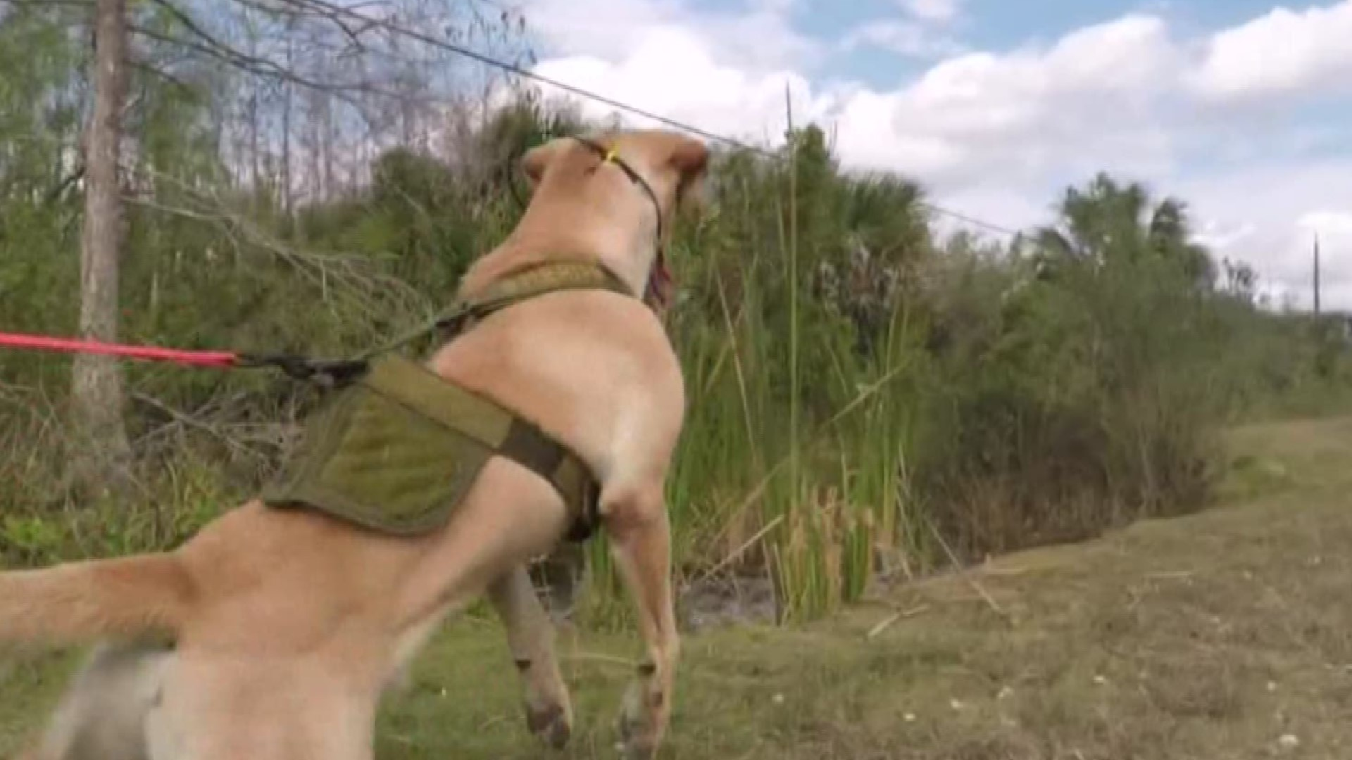 Cadaver Dogs Brought In To Search For Missing Florida Newborn