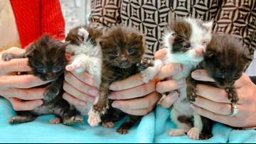 Kittens stow away in steel column on 400-mile trip