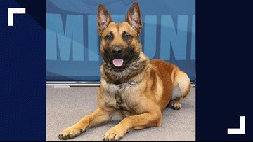 Police K-9 undergoes surgery after being stabbed multiple times