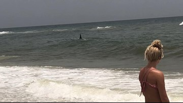 Hammerhead shark spotted off Florida beach