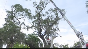 How much are 28 trees worth? Tampa targets tree cutters with record $840K fine